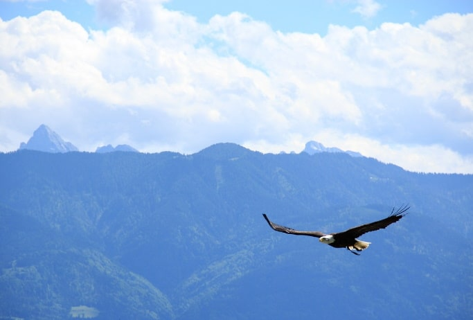 Weisheitsgeschichte: Deine Wahl - Adler oder Huhn