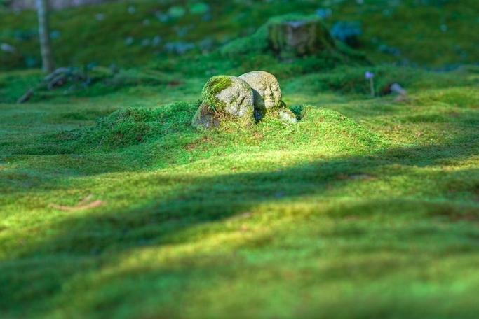 Weisheitsgeschichte: Der Stein im Garten