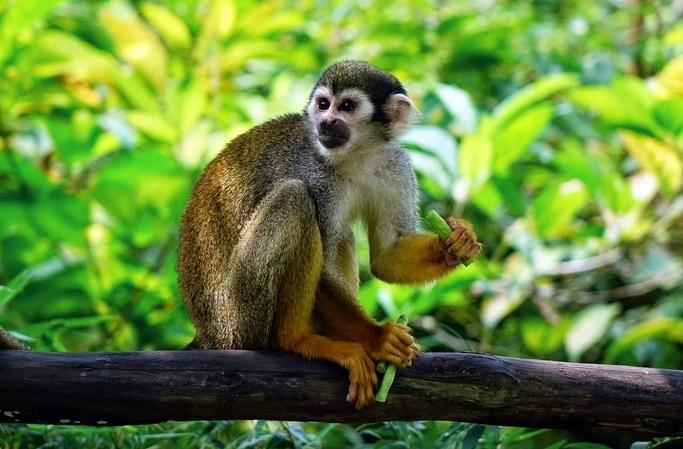 Die Affenfalle - eine Geschichte über das Loslassen